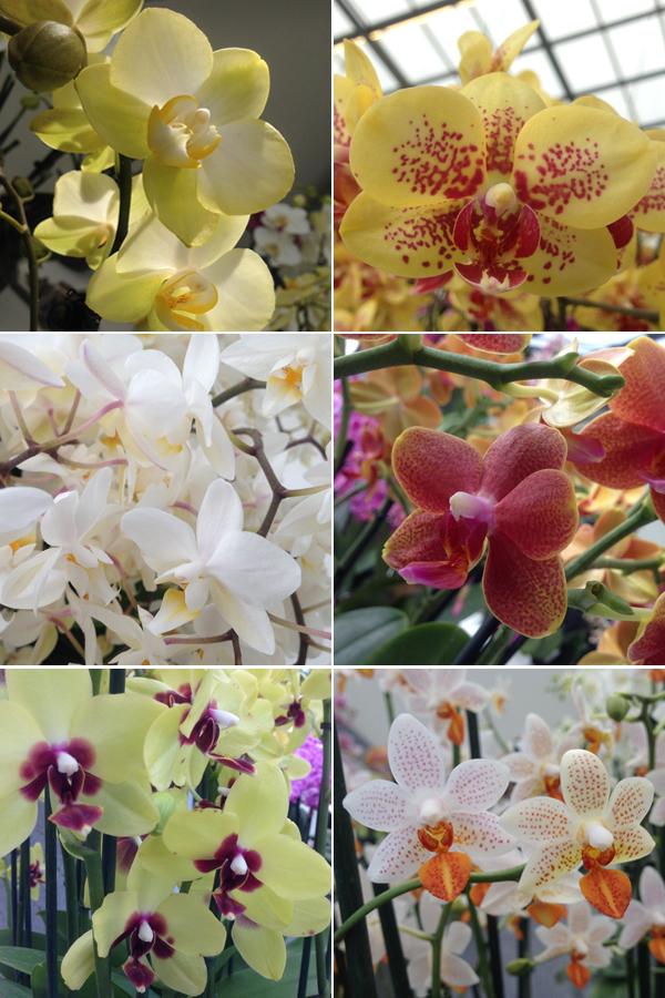 Happy Moments; Keukenhof met orchideeën