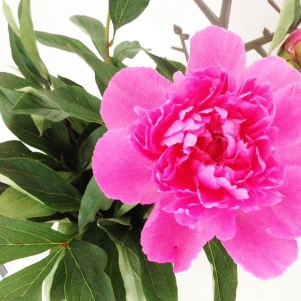 Bloemen in huis; pioenroos